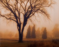 Whisper of Dawn Fine-Art Print