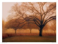 Memory of Trees Fine-Art Print