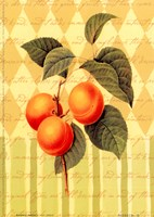 Botanical Apricot Fine-Art Print