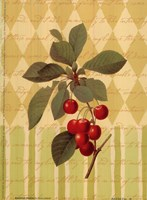 Botanical Cherries Fine-Art Print