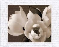 Winter Magnolia I Fine-Art Print