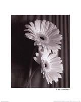 Fresh Cut Gerbera Daisy I Fine-Art Print