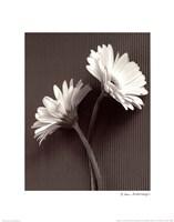 Fresh Cut Gerbera Daisy IV Fine-Art Print