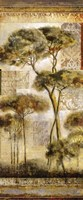 Italian Arbor I Fine-Art Print