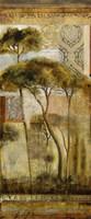 Italian Arbor II Fine-Art Print