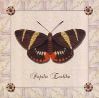 Papilio Evalthe II Fine-Art Print
