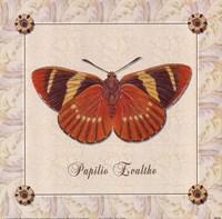 Papilio Evalthe I Fine-Art Print