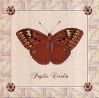 Papilio Cocalia Fine-Art Print