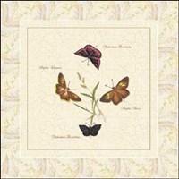 Papilio II Fine-Art Print