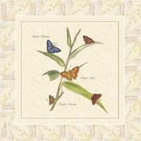 Papilio III Fine-Art Print
