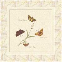Papilio IV Fine-Art Print
