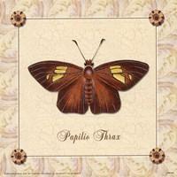 Papilio Thrax Fine-Art Print