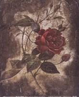 Vintage Rose II (Sm) Fine-Art Print