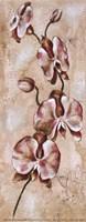 Tropical Orchid II Fine-Art Print