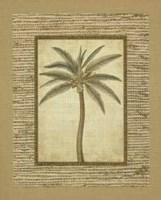 Date Palm Fine-Art Print