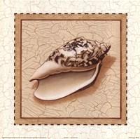 Seashells II Fine-Art Print