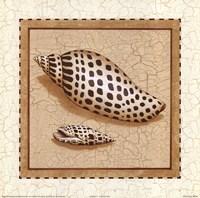 Seashells IV Fine-Art Print
