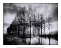 Trees in Normandy Fine-Art Print