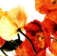 Poppies III Fine-Art Print