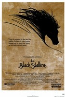 Black Stallion Fine-Art Print