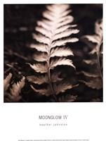 Moonglow IV Fine-Art Print