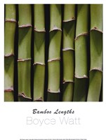 Bamboo Lengths Fine-Art Print