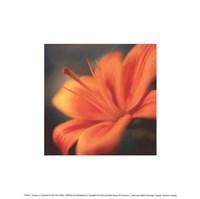 Orange on Turquoise Fine-Art Print