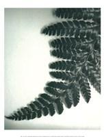 Fern Leaf II Fine-Art Print