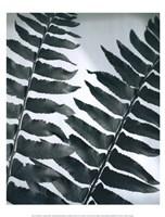 Fern Detail II Fine-Art Print