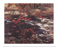 The Red Maple Fine-Art Print