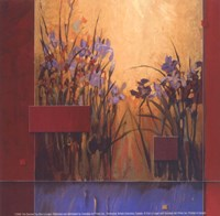 Iris Sunrise Fine-Art Print