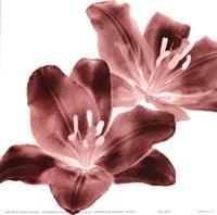 RedLilies Fine-Art Print