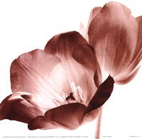 RedTulips Fine-Art Print
