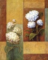 Blue & White Hydrangea Fine-Art Print