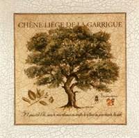 Chene Liege De La Garrigue Fine-Art Print