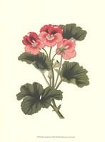 Pink Geranium I Fine-Art Print