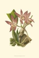 Blushing Orchids I Fine-Art Print