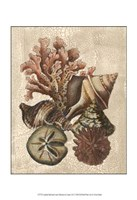 Crackled Shell and Coral Collection on Cream I Fine-Art Print