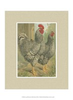 Cassell's Roosters with Mat II Fine-Art Print