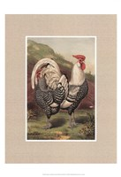 Cassell's Roosters with Mat III Fine-Art Print