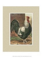 Cassell's Roosters with Mat IV Fine-Art Print