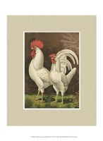 Cassell's Roosters with Mat VI Fine-Art Print