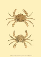 Antique Crab III Fine-Art Print