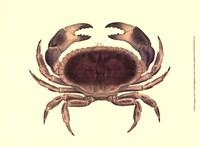 Antique Crab IV Fine-Art Print
