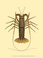 Antique Lobster IV Fine-Art Print