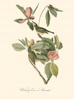 Audubon's Vireo Fine-Art Print
