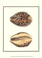 Leopard Cowry Shells Fine-Art Print