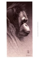 Jo-Jo, the Orangutan Fine-Art Print