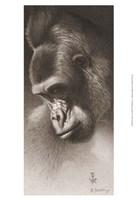 Silver Back, the Gorilla Fine-Art Print