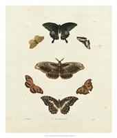 Butterflies III Giclee